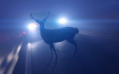 """Driving at night – Be """"deer aware"""""""